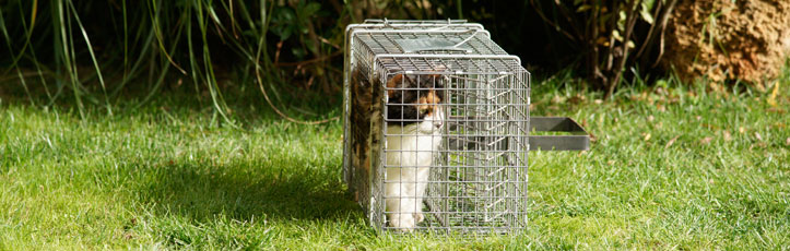 B 252 Examination and Care Compressed Cage for Cats
